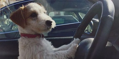 Related: Have Adorable Dogs Been The Solution To Road Rage This Whole Time?