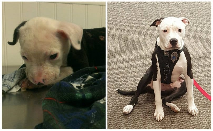 Pint-Size Puppy Saved From Fire Now Training To Be An Arson Detection Dog