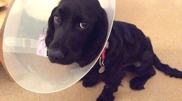 Puppy Is The Face Of Regret After Eating Tube Of Industrial Strength Glue