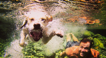 12 Dreamy Lake Beaches That Are Waiting For You And Your Dog