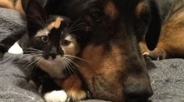 Shelter Kitty Refused To Leave Big Brother's Side From The Day She Was Adopted