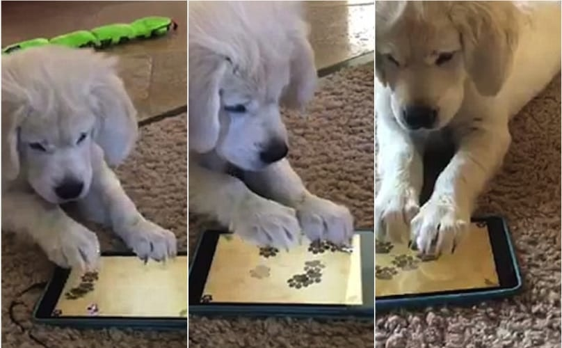 High-Tech Pup Masters iPad Game With Nose And Paws