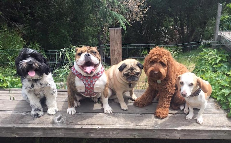 Dog Walker Takes Fun Photos Of His Furry Clients To Show Off His Pup Posse