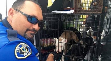 Police Officers Save 10 Week Old Pit Bull Puppies Left Inside Hot Car For Over 8 Hours