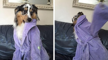 """15 Dogs Rebelling Against Your """"Cute"""" Photos"""