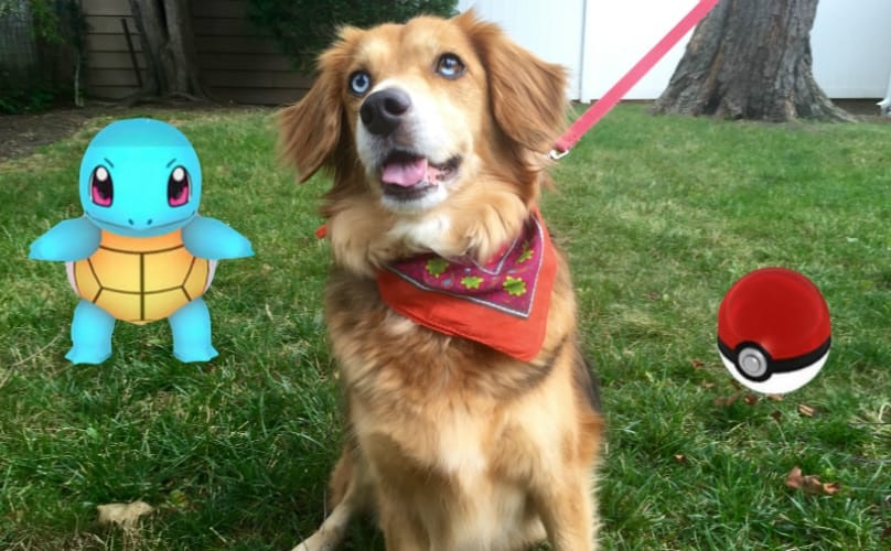 Here Are All The Ways You Can Help Shelter Dogs While Playing 'Pokémon Go'