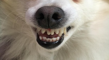 14 Dogs Goofing Off For Toothy Tuesday