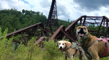 Road Trip For Good: The 7 Greatest Things To Do With Your Dog In Pennsylvania
