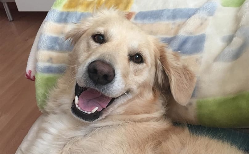 "15 Dogs Who Just Want To Say ""Cheeeese!"""