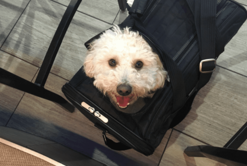 7 Of The Best Airline-Approved Dog Carriers For In-Cabin Flights