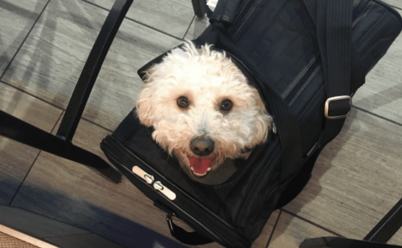 Airline Approved Pet Carrier >> 7 Of The Best Airline-Approved Dog Carriers For In-Cabin ...