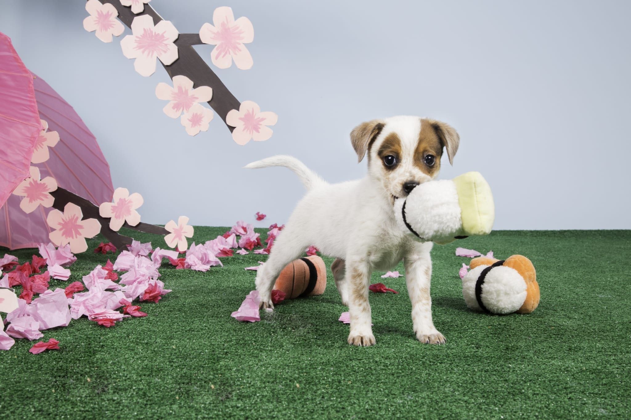 Are Playful Puppies Easier To Train?
