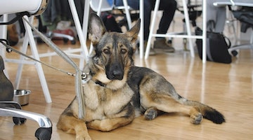 What Are The Best Toys For German Shepherds?