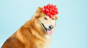 13 Best Gifts For Dog Lovers Under $10