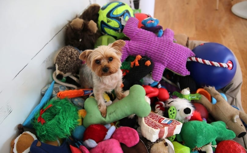 What Are The Best Toys For Small Dogs?