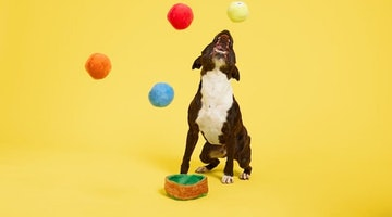 Are Rubber Balls Safe For Dogs?