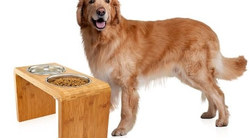 Should I Be Using An Elevated Bowl To Feed My Dog?