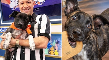 How to Adopt a Dog from the Puppy Bowl: An Interview with Foster Dogs' Sarah Brasky